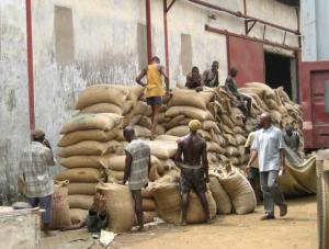 Nigerian workers load cocoa beans into shipping containers for export to Western markets, in Lagos.